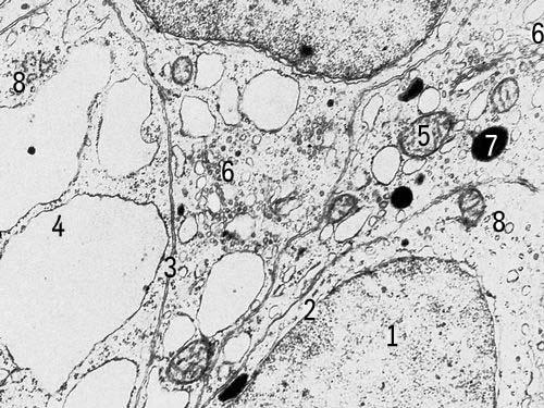 Ядро клетки гриба