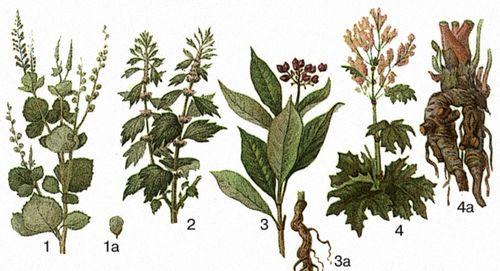 Лікарські рослини