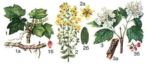 лекарственные растения от паразитов в организме человека