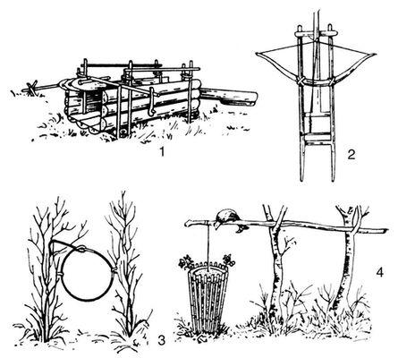 Ловушка на фазана своими руками чертежи 442