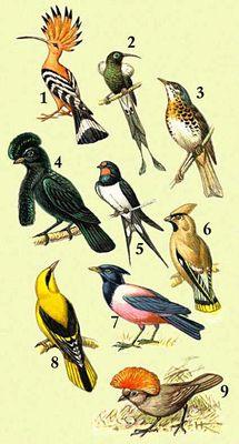 Птицы изображение