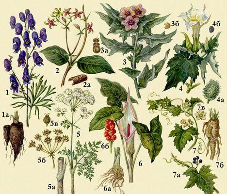 Ядовитые растения изображение